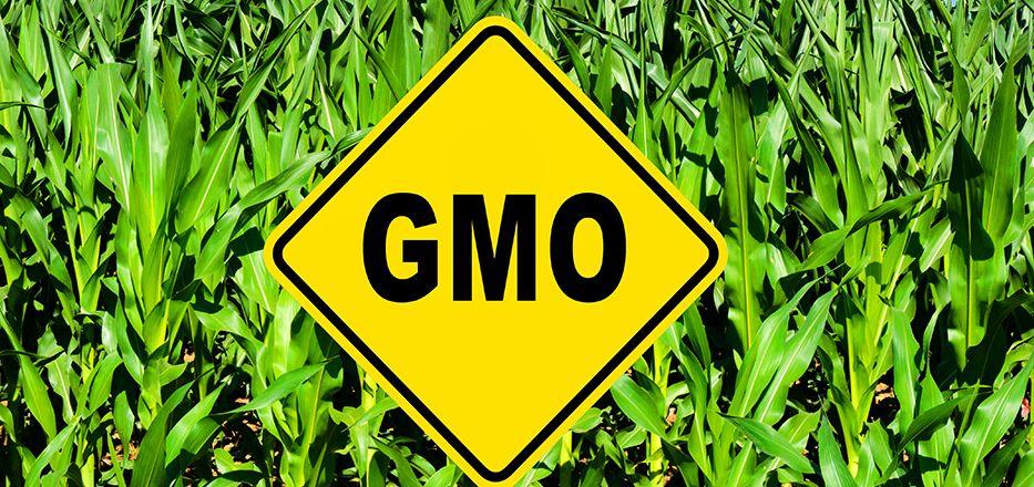 Domaći GMO proizvodi na tržištu BiH