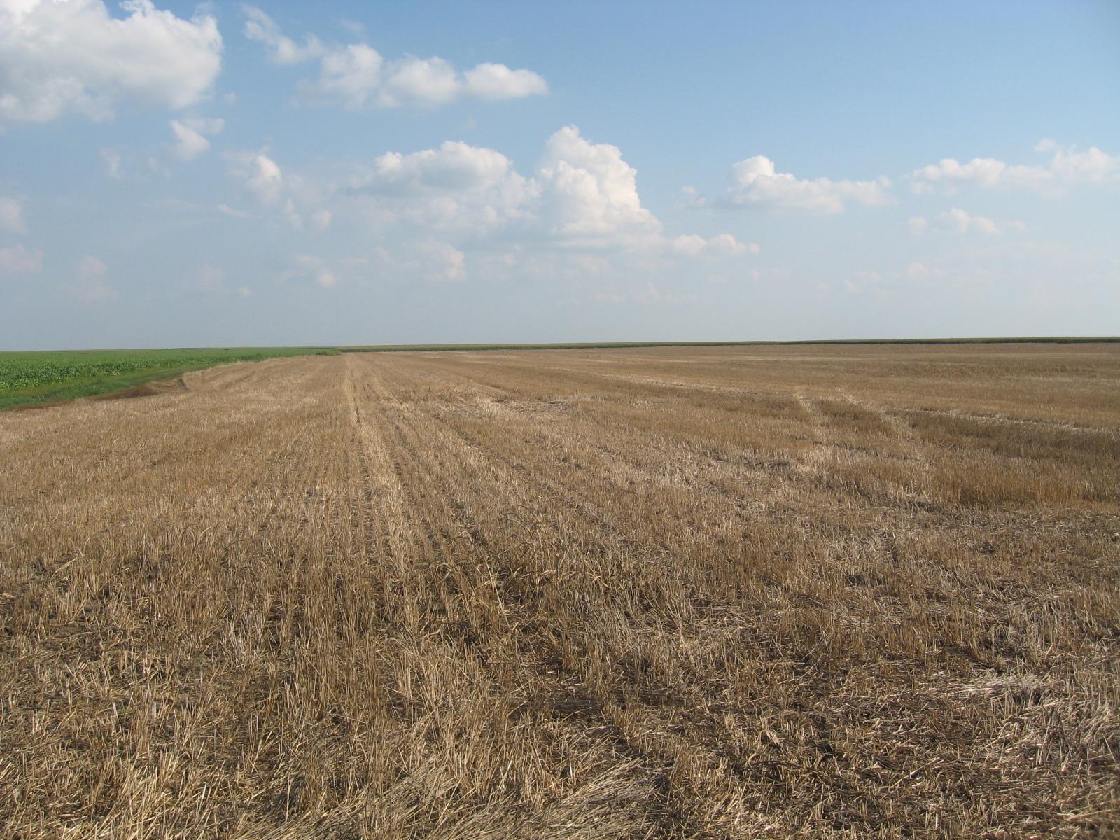 Kako postupati sa obradivim površinama nakon žetve strnih žita