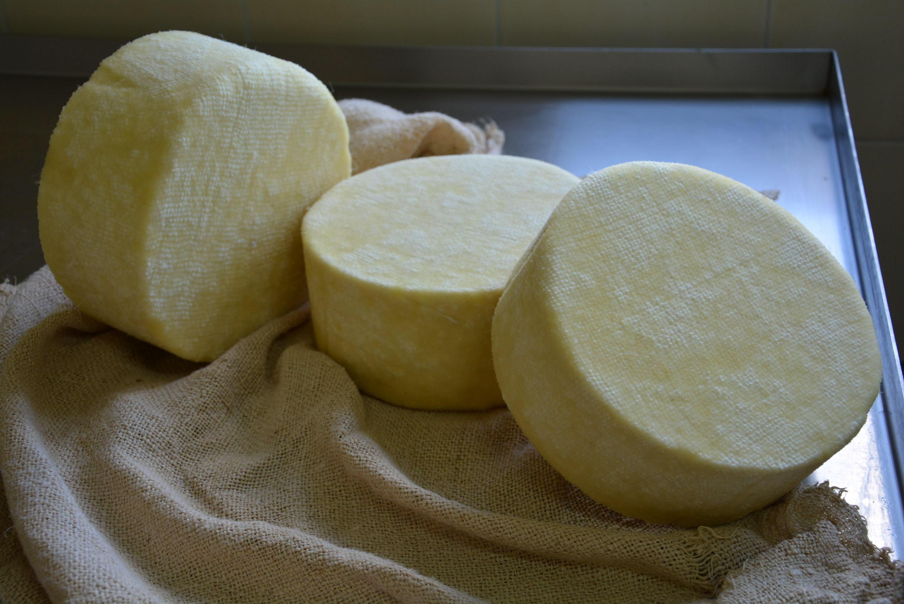 Tajna autohtonog livanjskog sira