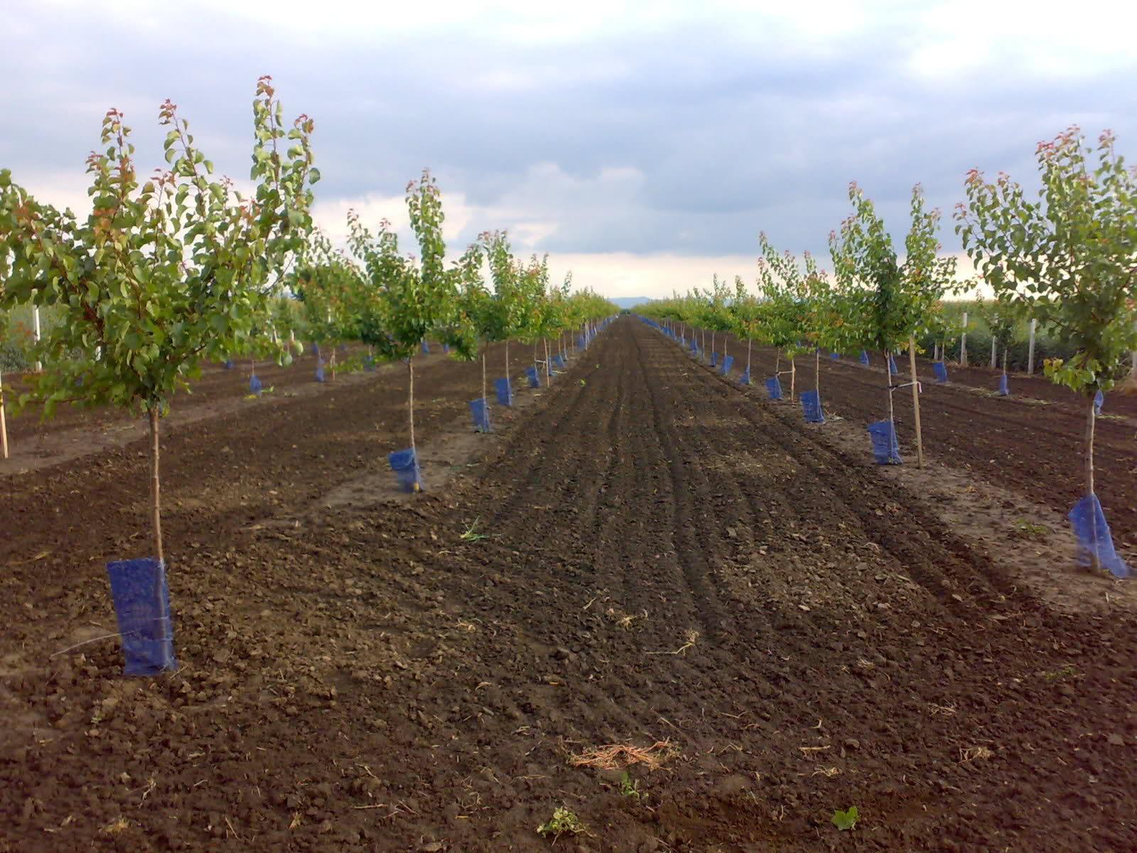 Pripremanje zemljišta za podizanje višegodišnjih nasada