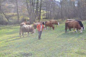 Ćatić Husejin i Emsad, uzgoj krava i prodaja mlijeka Bugojno