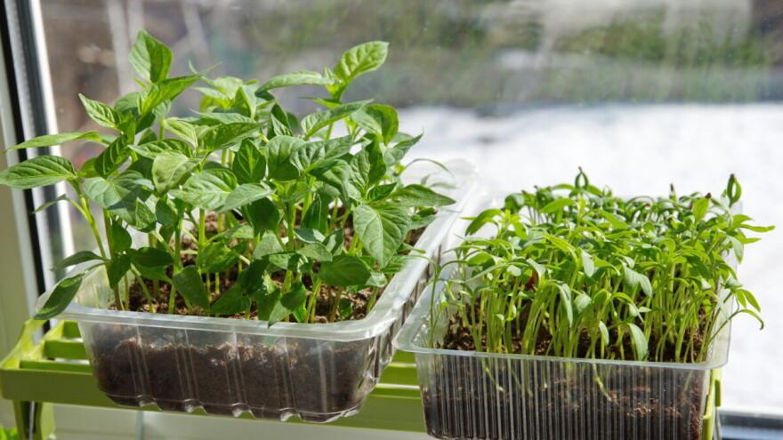 Februar - idealan mjesec za sjetvu povrća u zatvorenom