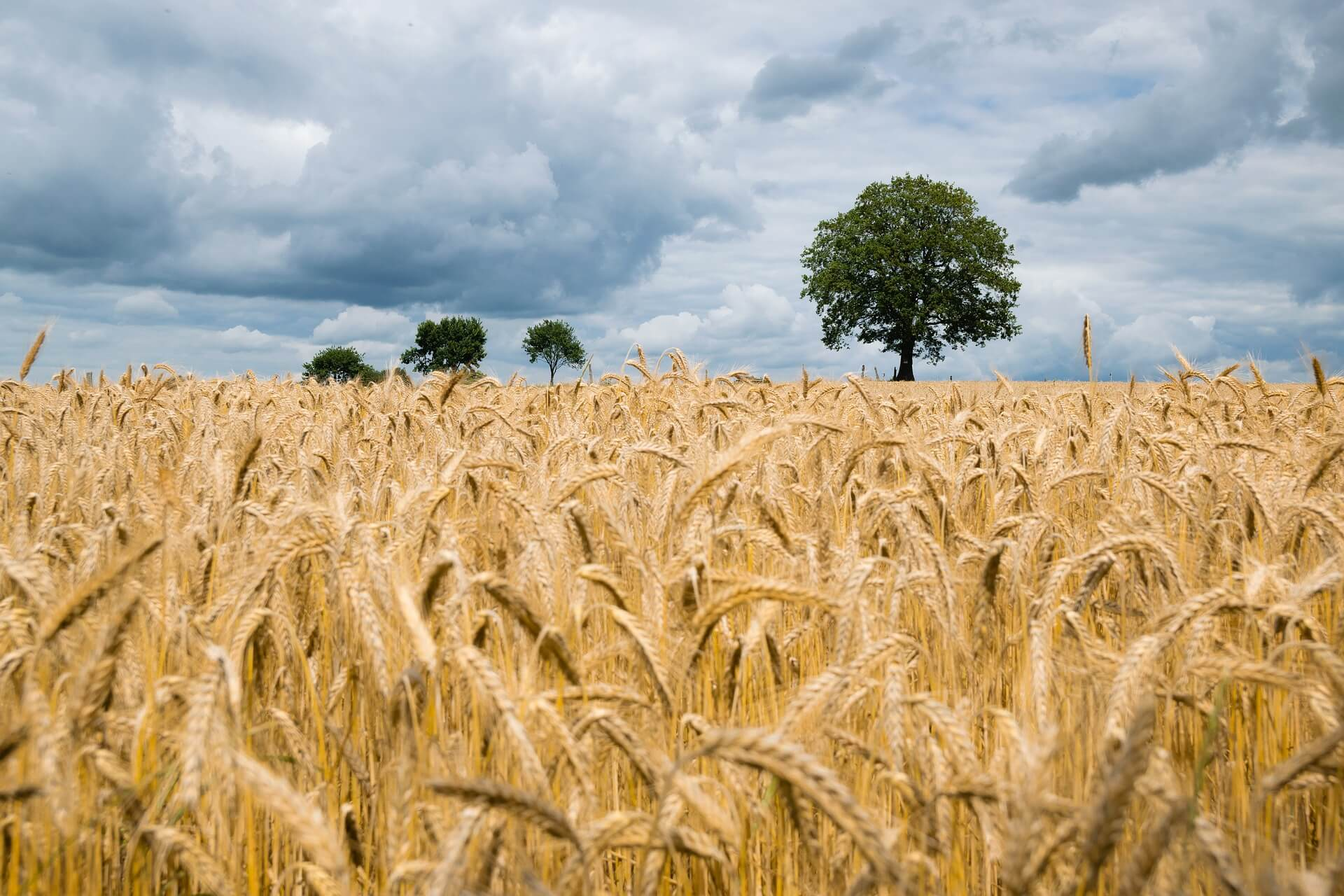 5 savjeta za uspješan ulazak u poljoprivredu