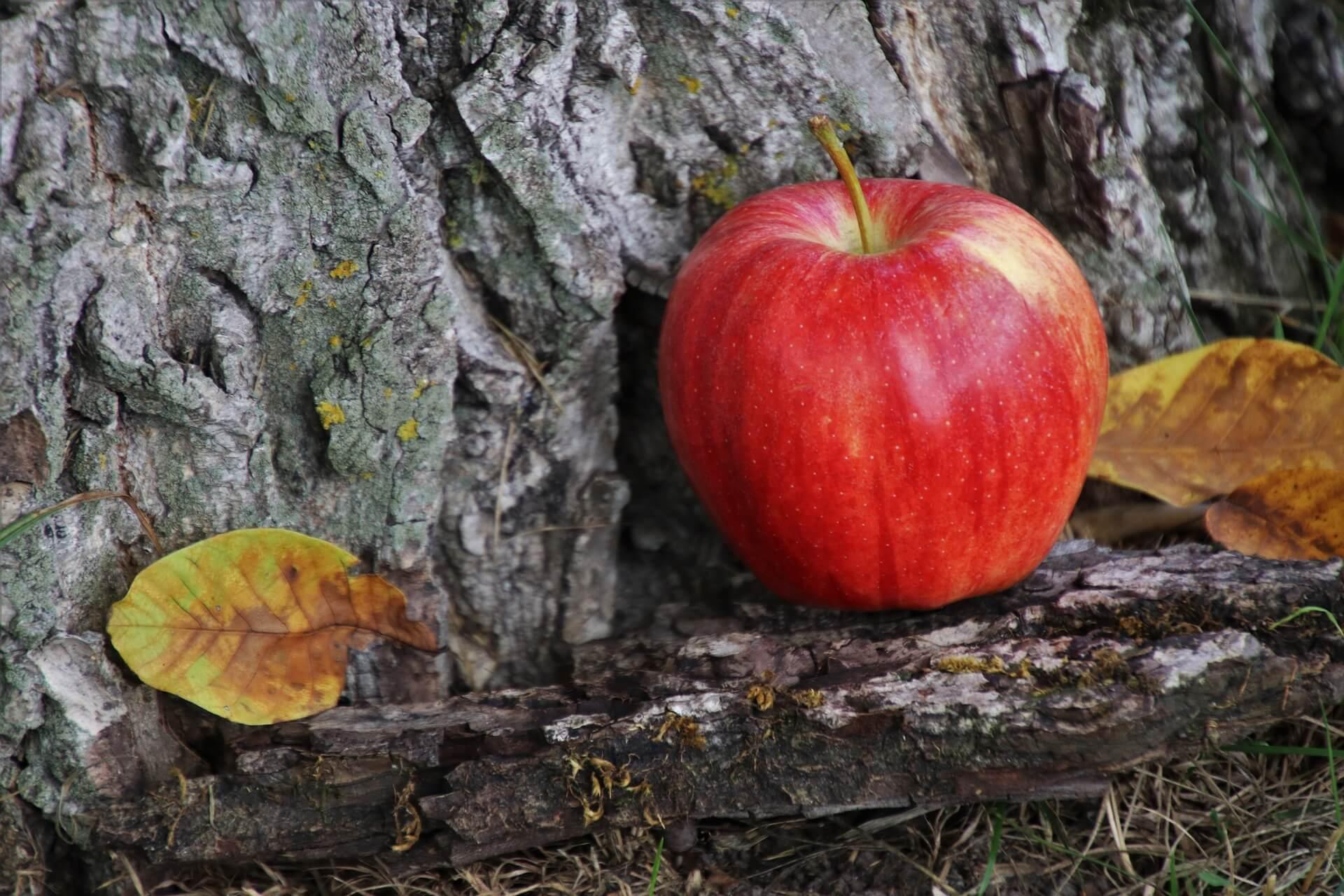 Spriječite rak kore jabuka tretiranjem bakrom i vapnom